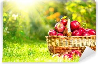 Organic Apples in a Basket outdoor. Orchard. Autumn Garden Vinyl Wall Mural
