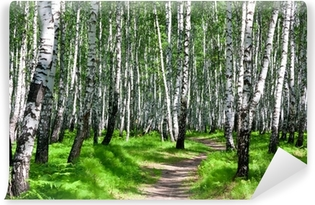 Path in a birch forest Vinyl Wall Mural