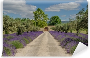 Path with lavender blooming Vinyl Wall Mural