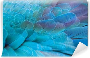 Pattern of colorful feathers Vinyl Wall Mural