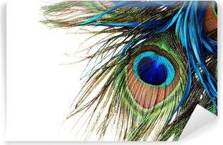 Peacock Feather Vinyl Wall Mural