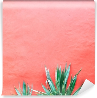 Plants on pink concept. Aloe on pink background wall. Minimal art Vinyl Wall Mural