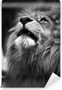 Portrait of Lion Looking Upwards Vinyl Wall Mural