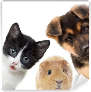 Puppy and kitten and guinea pig Vinyl Wall Mural