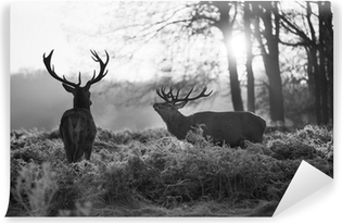 Red deer in Richmond park Vinyl Wall Mural