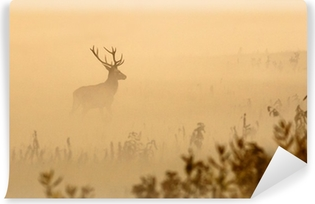 Red deer with big antlers stands on meadow on foggy morning Vinyl Wall Mural
