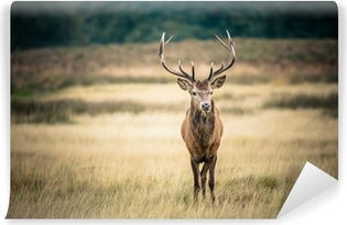 Red deer Vinyl Wall Mural