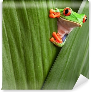 red eyed tree frog Vinyl Wall Mural