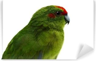 Red-fronted Kakariki parakeet, male isolated on white Wall Mural