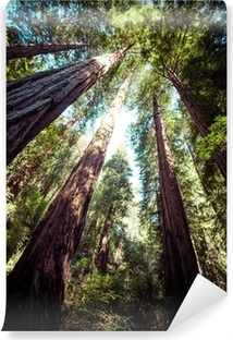 redwood national park in california, usa Vinyl Wall Mural