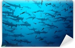 requin marteau en banc, Galapagos Vinyl Wall Mural