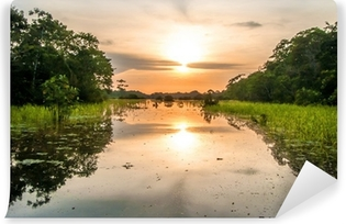 River in the Amazon Rainforest at dusk, Peru, South America Vinyl Wall Mural