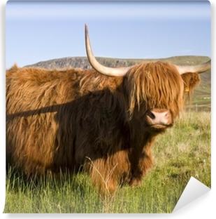 Scottish highland cow Vinyl Wall Mural