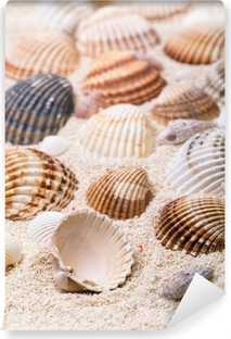 Sea shells with coral sand Vinyl Wall Mural