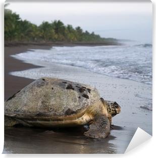 Sea turtle in Tortuguero National Park, Costa Rica Vinyl Wall Mural