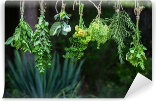 Set of herbs hanging and drying Vinyl Wall Mural