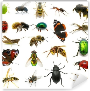 Set of insects Vinyl Wall Mural