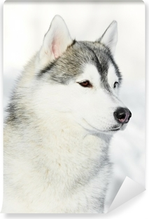 Siberian husky dog portrait at winter Vinyl Wall Mural