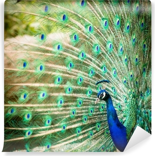 White peacock Wall Mural Pixers We live to change
