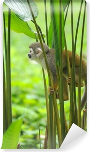 Squirrel Monkey in amazon rainforest Vinyl Wall Mural