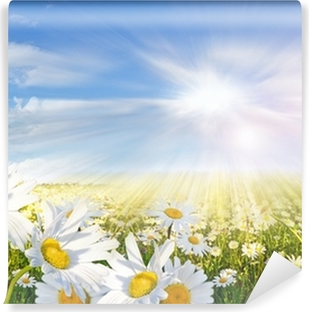 Summer: Field of daisy flowers with blue sky and clouds Vinyl Wall Mural