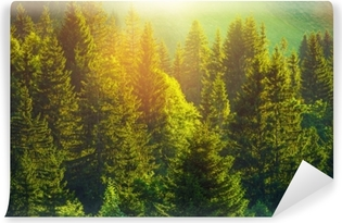 Summer in the Alpine Forest Vinyl Wall Mural