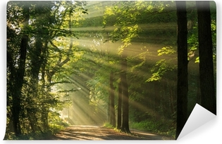 Sun rays shining through the forest Vinyl Wall Mural