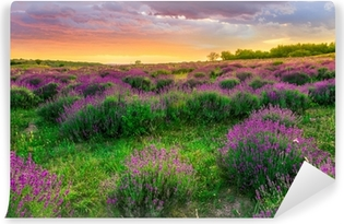 Sunset over a summer lavender field in Tihany, Hungary Vinyl Wall Mural