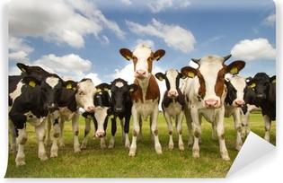 Team of Dutch cows Vinyl Wall Mural