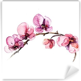 the watercolor flowers orchid isolated on the white background Vinyl Wall Mural