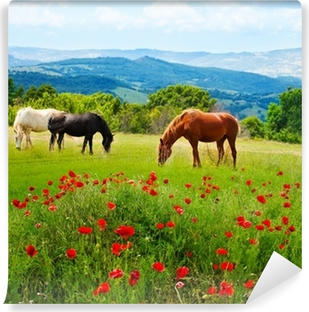 There horses grazing grass Vinyl Wall Mural