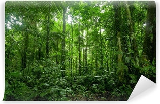 Tropical Rainforest Landscape, Amazon Vinyl Wall Mural