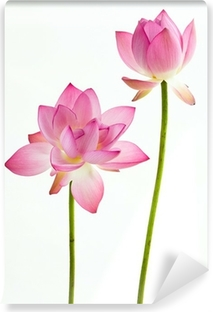 Twain pink water lily flower (lotus) and white background. Vinyl Wall Mural