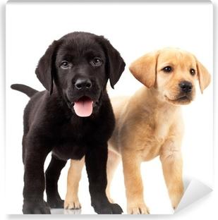 two cute labrador puppies Vinyl Wall Mural