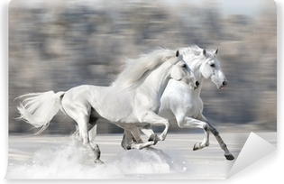 Two white horses in winter run gallop Vinyl Wall Mural