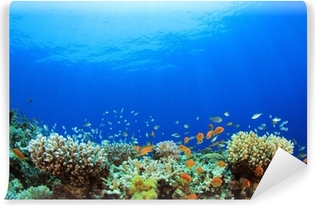 Underwater Coral Reef and Tropical Fish Vinyl Wall Mural
