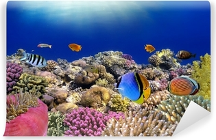 Underwater world. Coral fishes of Red sea. Vinyl Wall Mural