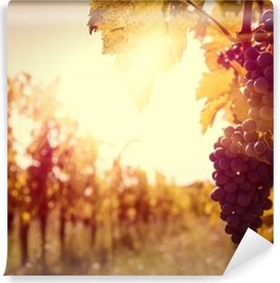 Vineyard at sunset in autumn harvest. Vinyl Wall Mural