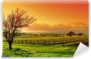 Vineyard landscape Vinyl Wall Mural