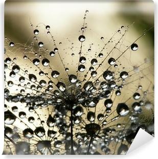 Wet dandelion seed Vinyl Wall Mural