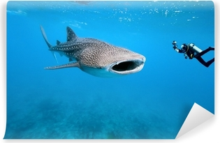 Whale shark and underwater photographer Vinyl Wall Mural