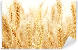 Wheat Vinyl Wall Mural