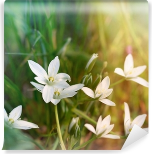 White meadow flowers poster pixers we live to change white meadow flowers self adhesive wall mural mightylinksfo