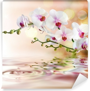 white orchids on water with drop Vinyl Wall Mural