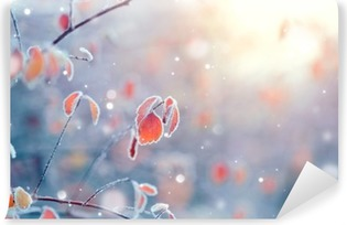 Winter nature background. Frozen branch with leaves closeup Vinyl Wall Mural