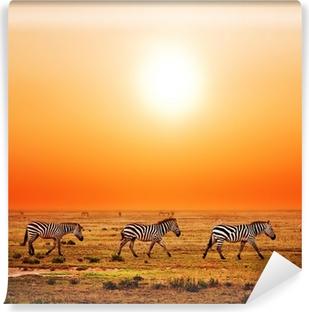 Zebras Wall Murals - Charme of the African savanna • Pixers® - We