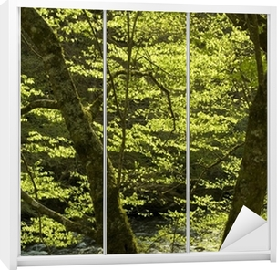 backlit spring trees and the little river Wardrobe Sticker