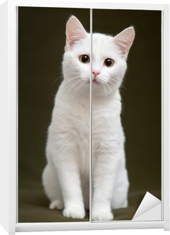 Beautiful white cat with yellow eyes sitting on blanket Wardrobe Sticker