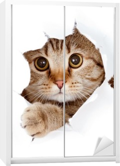 cat looking up in paper side torn hole isolated Wardrobe Sticker