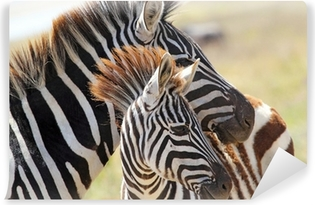 Baby zebra with mother Washable Wall Mural
